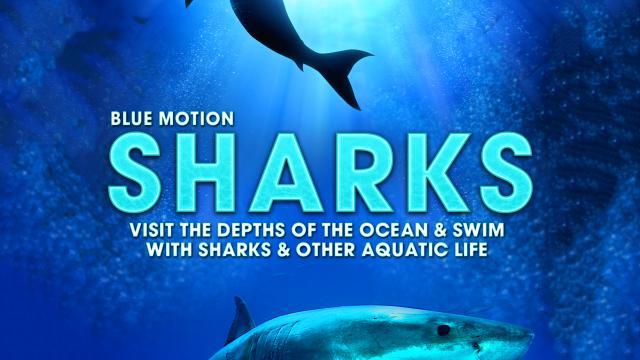 Sharks: Visit the Depths of the Ocean & Swim with Sharks & Other Aquatic Life (Blue Motion)